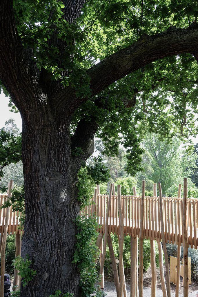 Treetop Walkway Kew Children's Garden