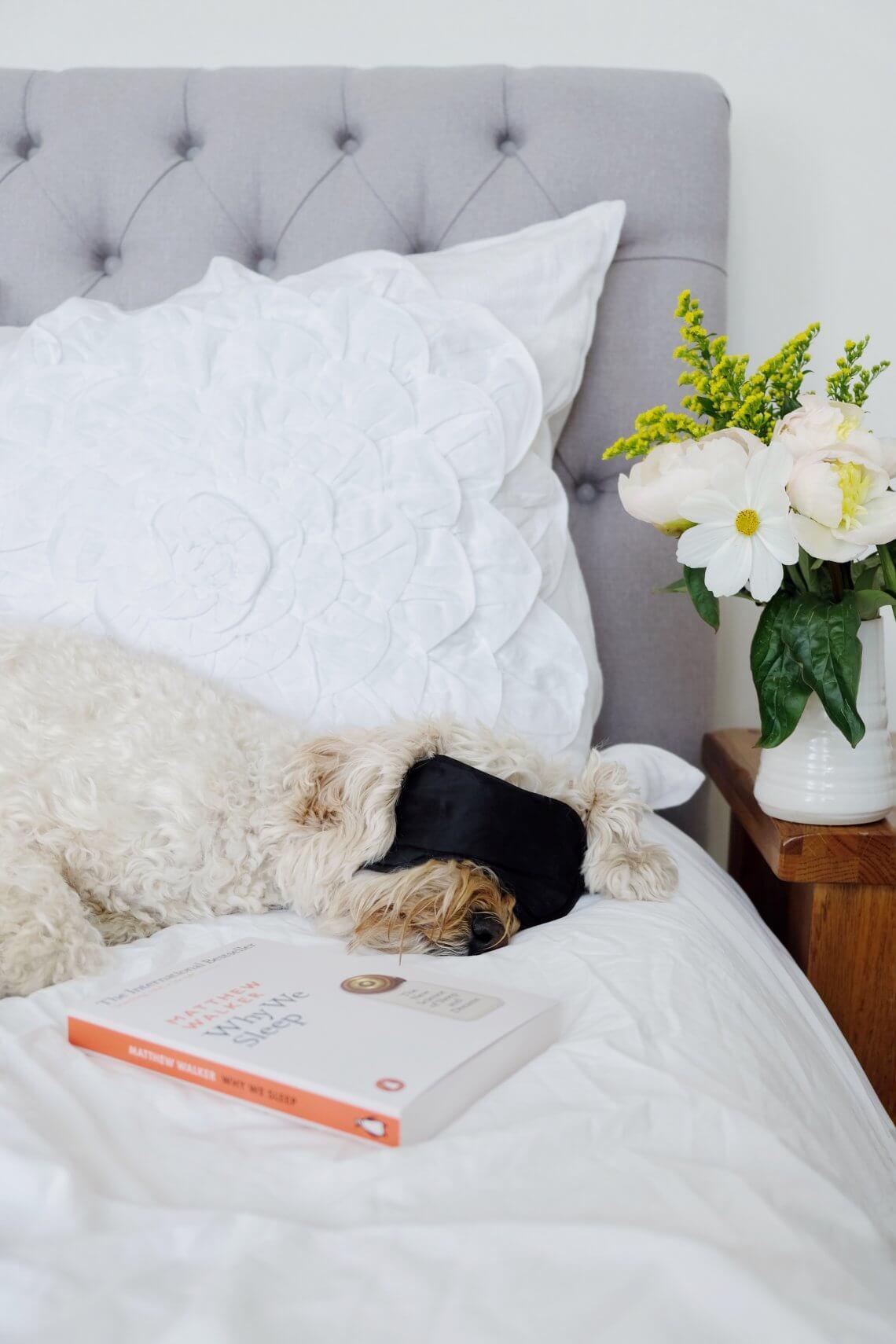 Why We Sleep Matthew Walker Sleeping Dog