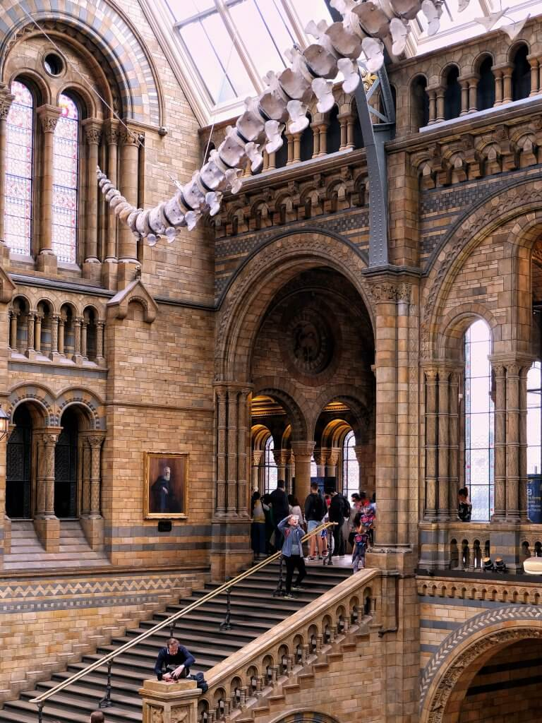 Natural-history-museum-hintze-hall