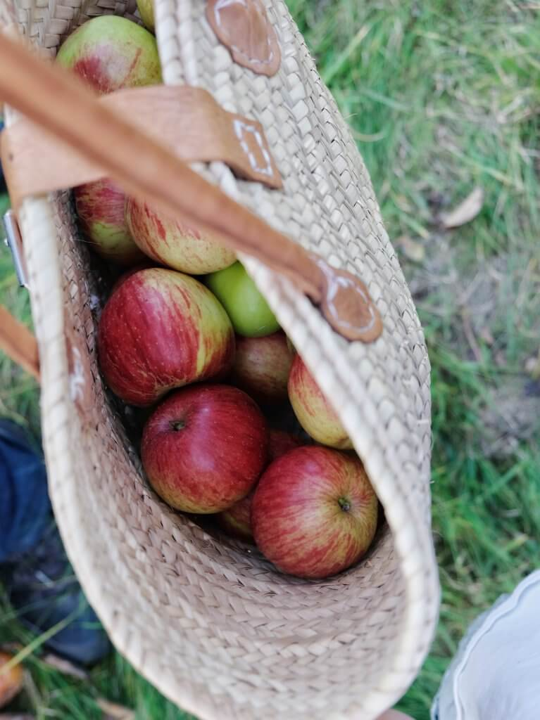 Basket_of_apples